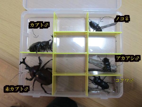 2013/08/04 採集
