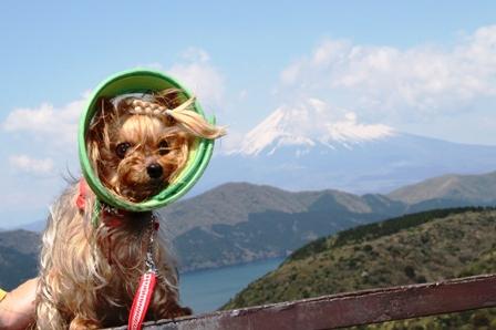 ひこと富士山