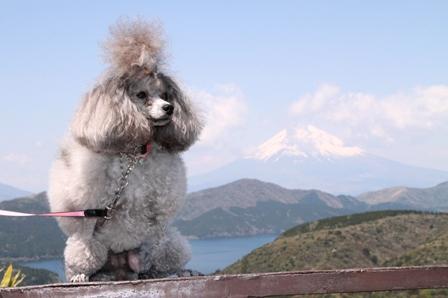 にこと富士山