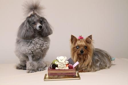 2ショットケーキ