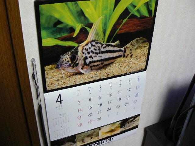 カレンダーをめくりました