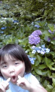 ゆずちゃん紫陽花写真1
