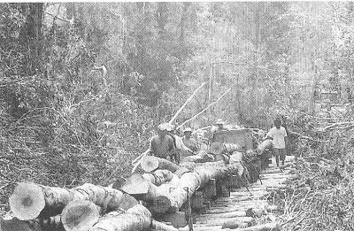 先住民族が利用している森の木が伐採され運ばれた様子