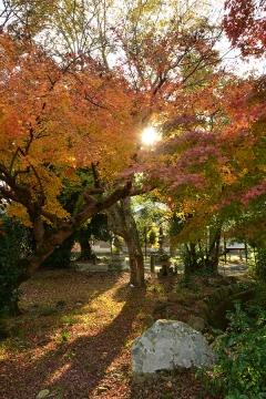 秋の風情2013(6)