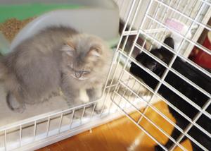 6月20日鎌倉猫あーちゃん1