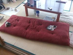 とらきち君おはなぼーちゃん4