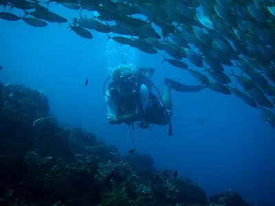 南国お気楽じゃなくなった、ひとり暮らし-Cebu mactan diving