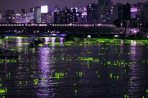 東京ほたる1
