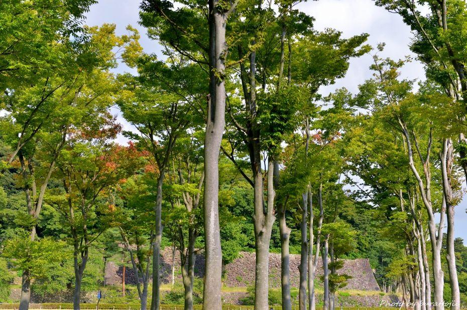 2014.09.28広阪アメリカ楓4