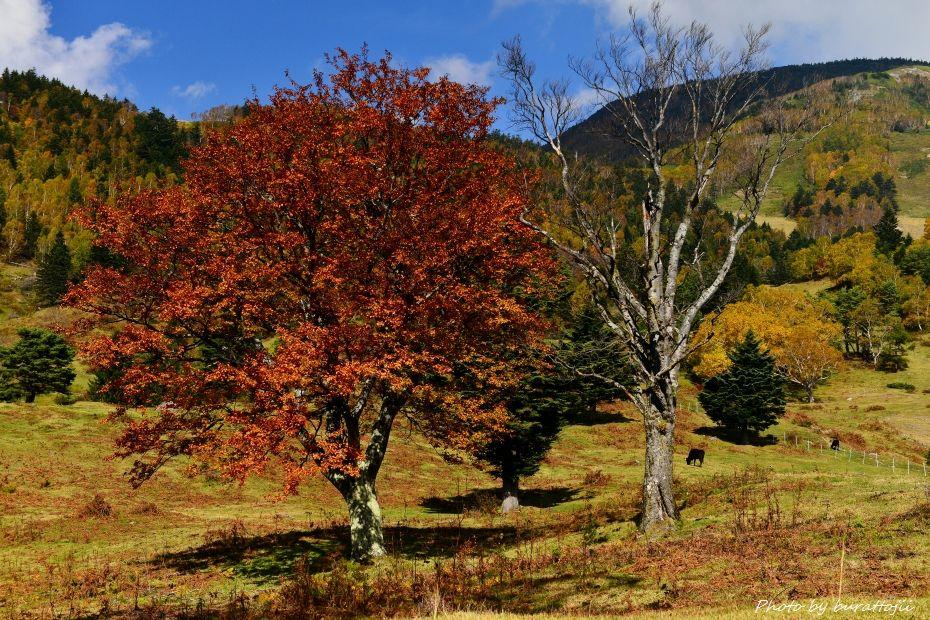 2014.10.09信州高山村山田牧場5