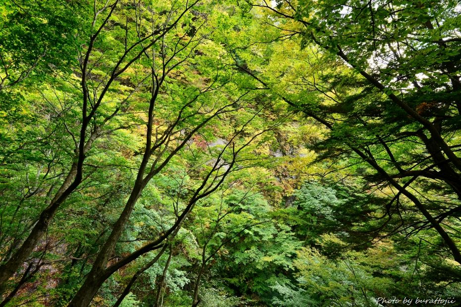 2014.10.09雷滝1