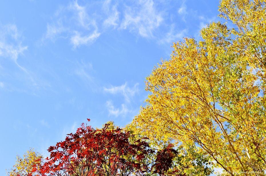 2014.10.9笠ヶ岳への風景2