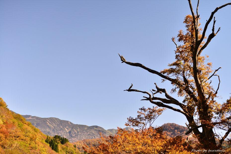2014.10.26白峰紅葉7