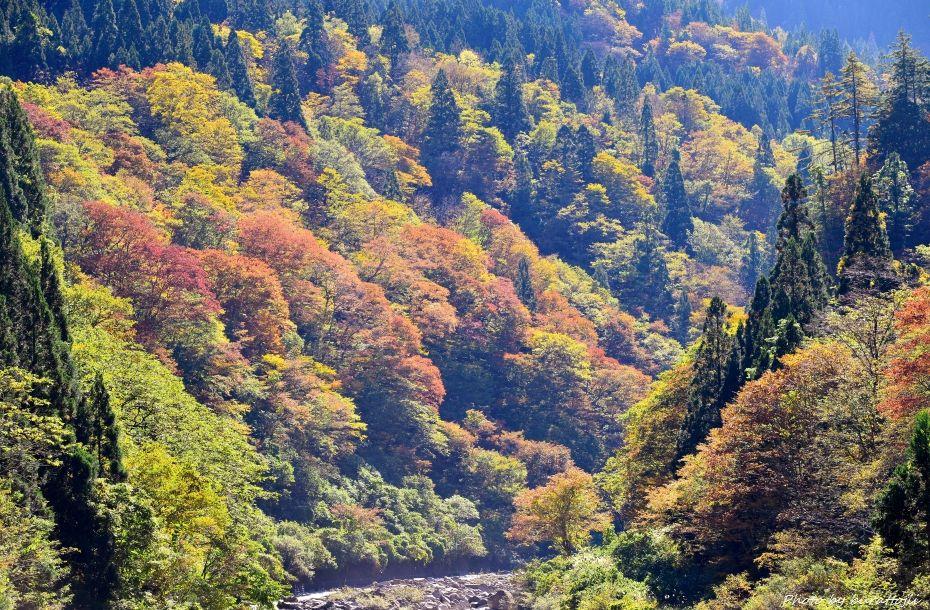 2014.10.26白峰紅葉4