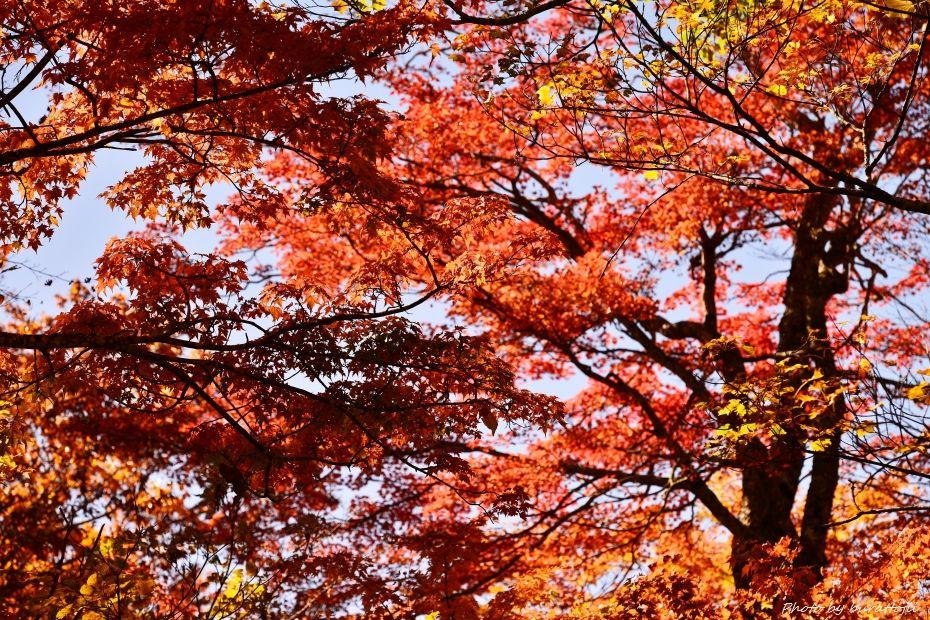 2014.10.26白峰紅葉3