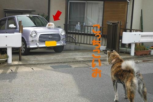 s-130329-4.jpg
