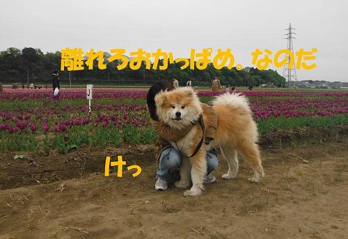 s-130423-5.jpg