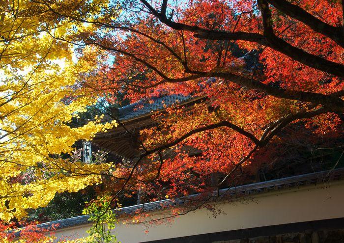 14-11-25-1円興寺