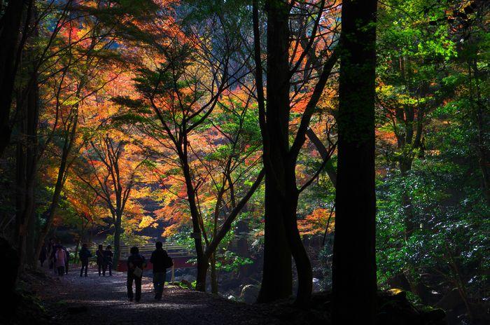 14-11-26-1くらがり渓谷