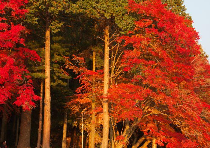 14-11-27-1曾木公園