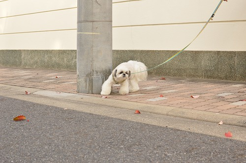 DSC_0017_20131121003743eda.jpg
