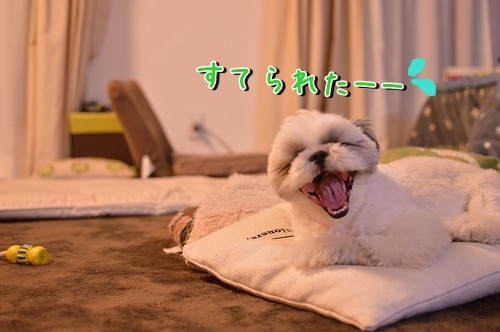 DSC_0145_201311210043024e1.jpg