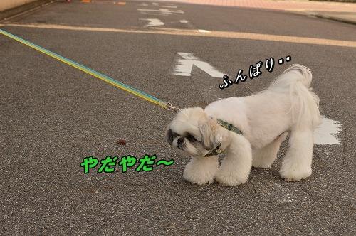 DSC_0192_20131108160814c41.jpg