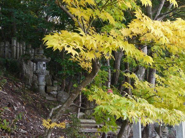 mishimaike011.jpg