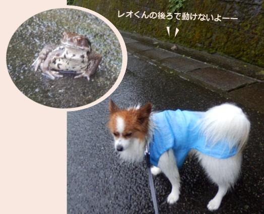 台風の中のお散歩