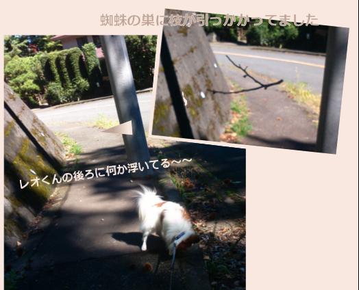 台風去ってお散歩