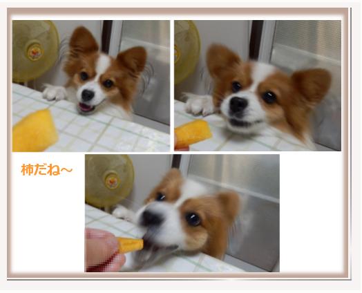 柿だぁああ~