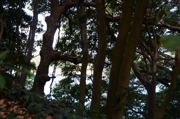 20131013douami001.jpg