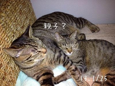 ミュウとセナ-03