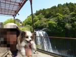 白糸の滝Withぴー
