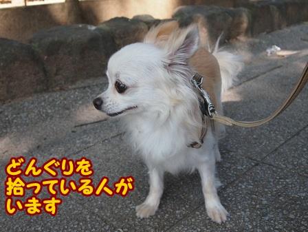 blog4451a.jpg