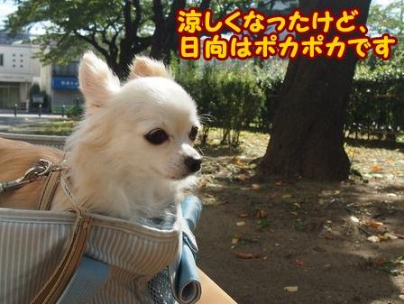blog4520a.jpg
