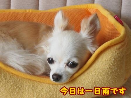 blog4583a.jpg