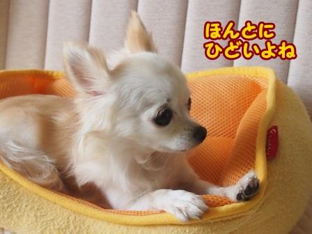 blog4584a.jpg