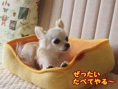 blog4589a.jpg