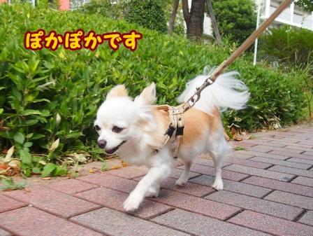 blog4612a.jpg