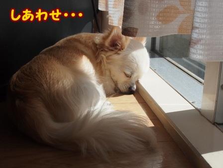 blog4615a.jpg