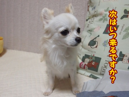 blog4638a.jpg