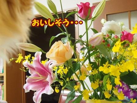 blog4667a.jpg