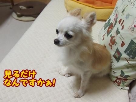blog4670a.jpg