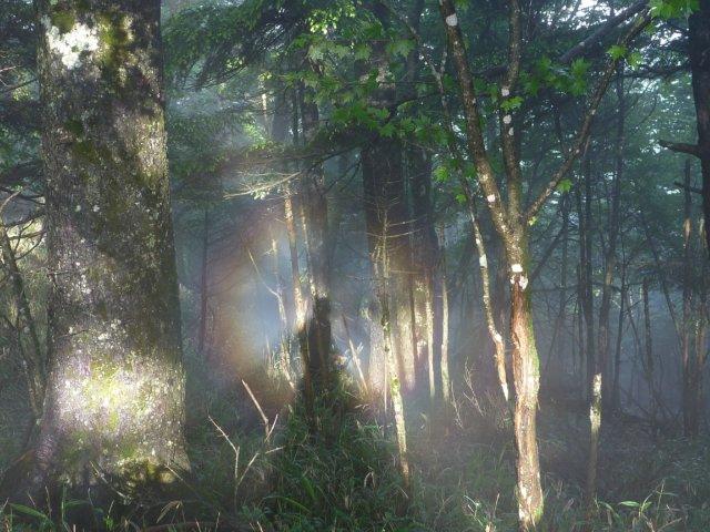 07 森のブロッケン