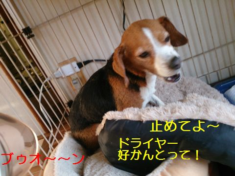 DSC_5065.jpg