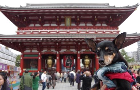 浅草寺だよ~