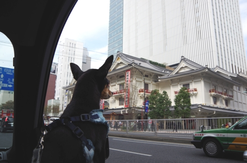 ここが新歌舞伎座ねっ!
