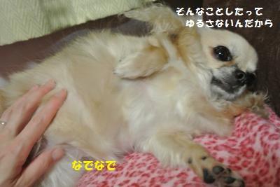 DSC_0083_convert_20131101104548.jpg