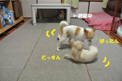 DSC_0361_convert_20131107102742.jpg